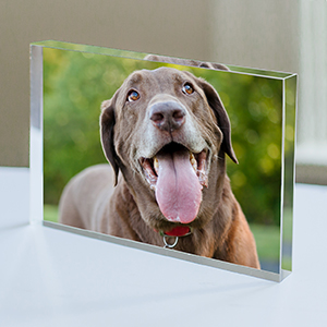 Personalized Pet Photo Keepsake 3118254