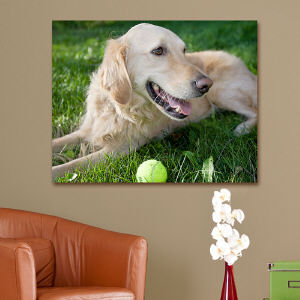 Picture Perfect Pet Photo 18 x 24 Canvas