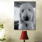 Picture Perfect Pet Photo Canvas