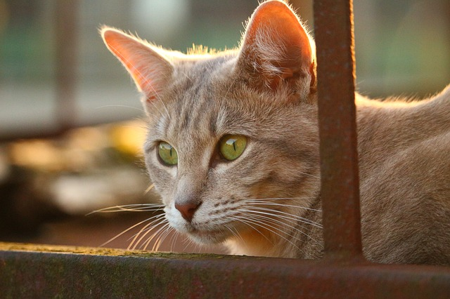 Pet Memorial Quotes for Cats