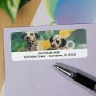 Dalmations Personalized Photo Address Labels