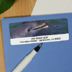 Dolphins Personalized Photo Address Labels
